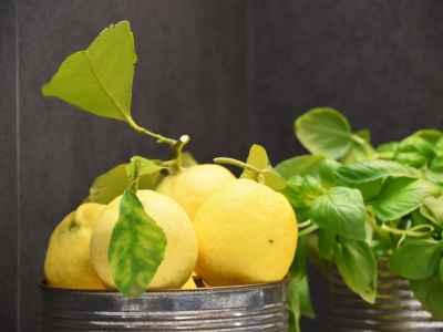 Citrons et basilic Pietraverdemare