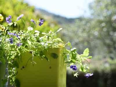 Fleurs et couleurs d'été pietraverdemare