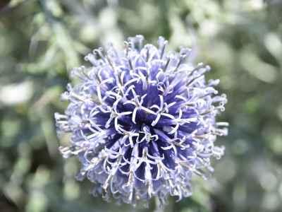 Fiore del rigoglioso giardino
